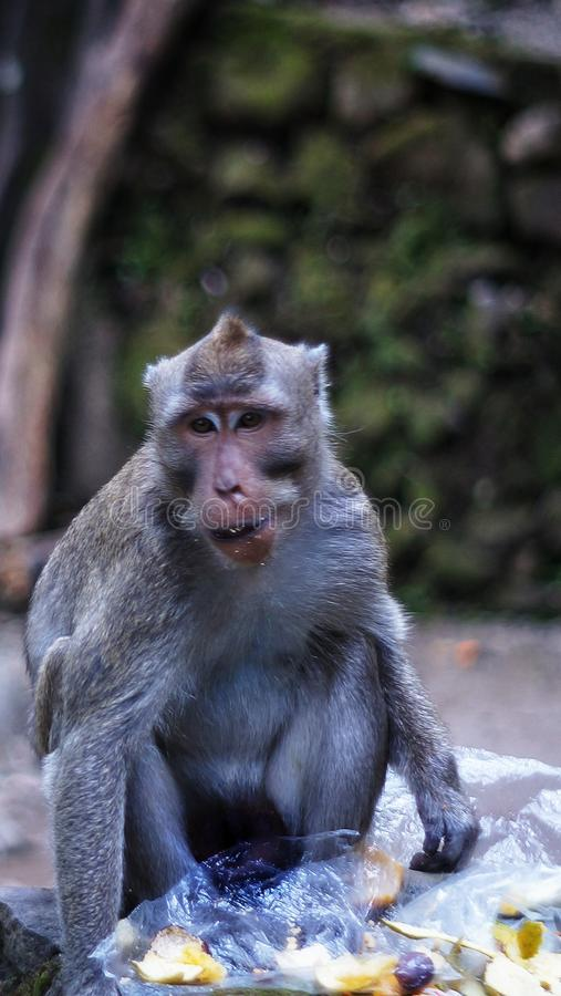 Ο μικρός πίθηκος τρώει το πορτοκάλι στοκ φωτογραφία με δικαίωμα ελεύθερης χρήσης