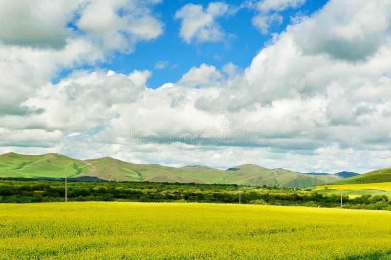 Ο μπλε ουρανός και τα άσπρα σύννεφα στο θερινό λιβάδι Hulunbuir στοκ εικόνα