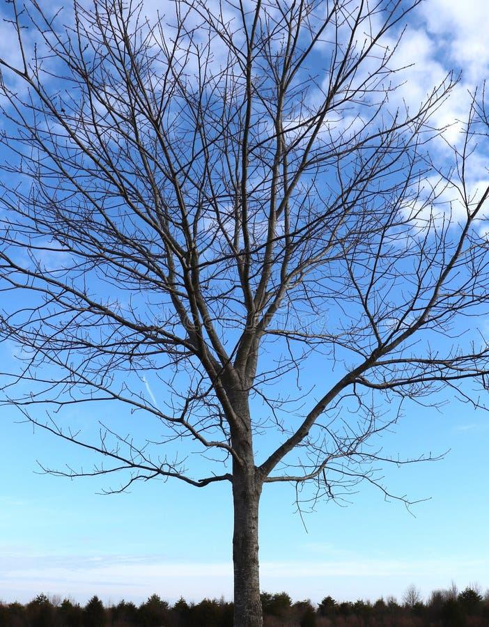 Ο μπλε ουρανός, οι γυμνοί κλάδοι που χαράζουν εξωτερικά, Treetops στην απόσταση, δημιουργούν τη χειμερινή ομορφιά Scenci στοκ φωτογραφίες με δικαίωμα ελεύθερης χρήσης