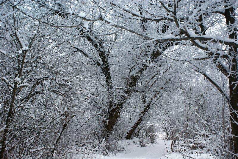 ο μπλε παγετός σκοτεινής μέρας κλάδων βρίσκεται χειμώνας δέντρων χιονιού ουρανού Ήρεμα δασικά χιονισμένα δέντρα και μια μικρή πορ στοκ φωτογραφίες με δικαίωμα ελεύθερης χρήσης
