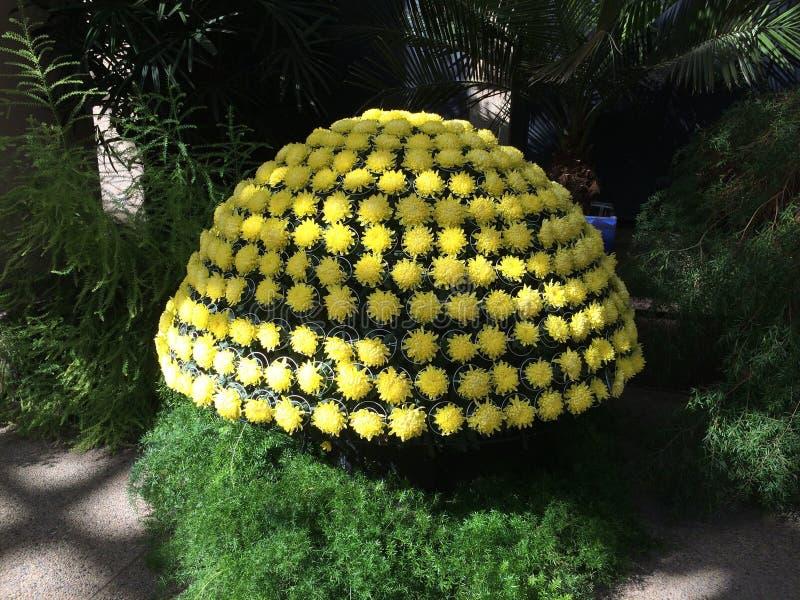 Ο Μπους λουλουδιών στοκ φωτογραφία με δικαίωμα ελεύθερης χρήσης