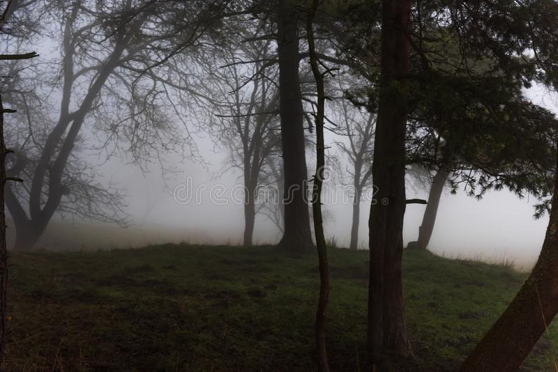 Ο μυστηριώδης λόφος στο δάσος είναι στην ομίχλη στοκ εικόνες με δικαίωμα ελεύθερης χρήσης