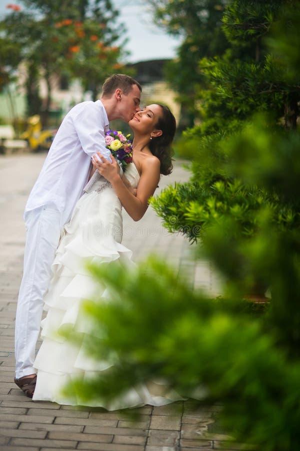 Ο νεόνυμφος φιλά τη νύφη Φίλημα γαμήλιων ζευγών στη μέση των πράσινων εγκαταστάσεων στο πάρκο στοκ φωτογραφία