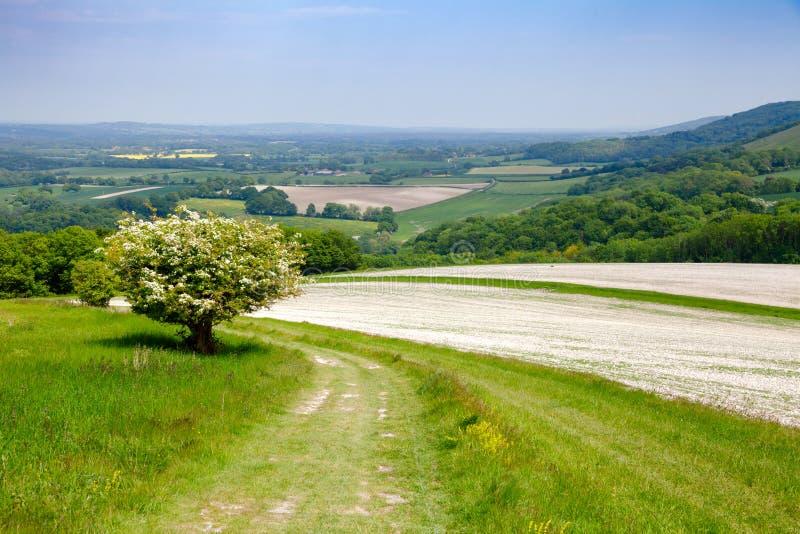 Ο νότος κατεβάζει το εθνικό ίχνος τρόπων στο Σάσσεξ νότια Αγγλία UK στοκ φωτογραφία με δικαίωμα ελεύθερης χρήσης