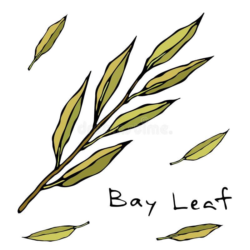 Ο ξηρός κλάδος άδειας Green Bay κλαδίσκος φύλλων Υπόβαθρο με το αρωματικό χορτάρι Φρέσκο μαγειρεύοντας συστατικό Κρέας, σούπα, κύ ελεύθερη απεικόνιση δικαιώματος