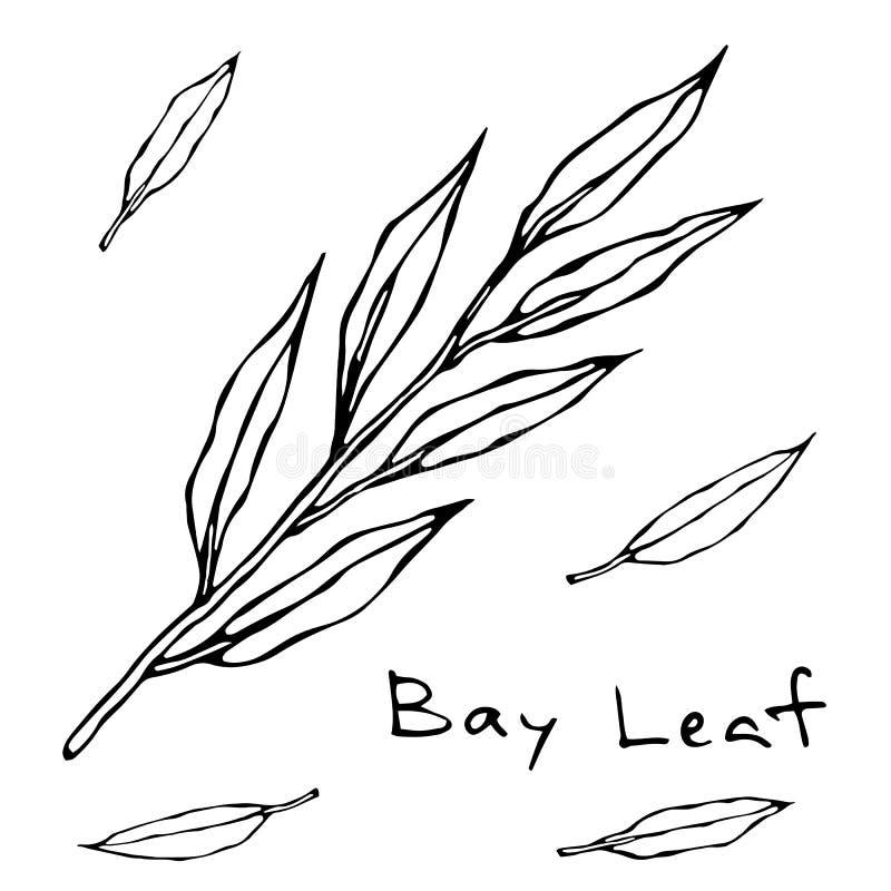 Ο ξηρός κλάδος άδειας Green Bay κλαδίσκος φύλλων Υπόβαθρο με το αρωματικό χορτάρι Φρέσκο μαγειρεύοντας συστατικό Κρέας, σούπα, κύ διανυσματική απεικόνιση