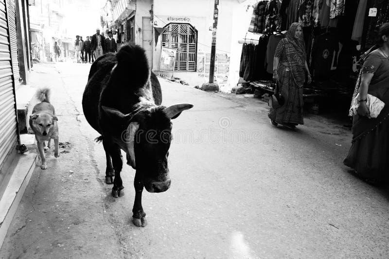 Οδοί της Ινδίας με τους ανθρώπους, την αγελάδα και το σκυλί στοκ εικόνες με δικαίωμα ελεύθερης χρήσης