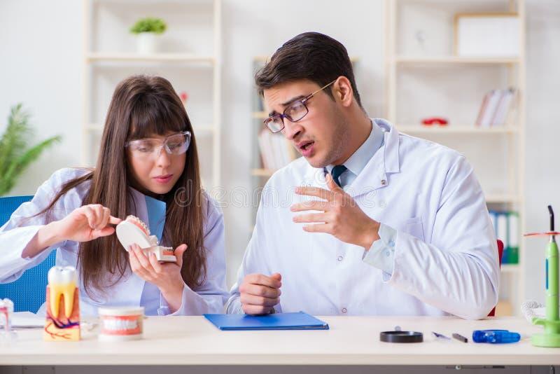 Ο οδοντίατρος που εξηγεί τη δομή δοντιών σπουδαστών στοκ φωτογραφία