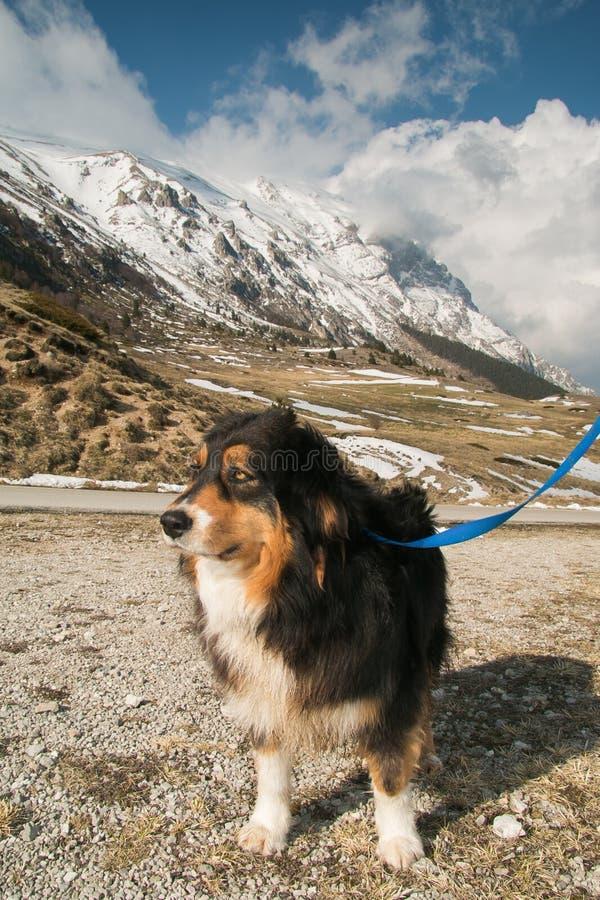 Οδοιπορία βουνών με το σκυλί στοκ εικόνες