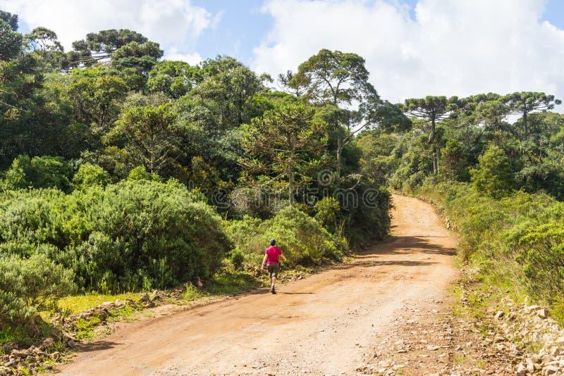 Οδοιπορία κοριτσιών σε έναν αγροτικό δρόμο με τις εγκαταστάσεις στοκ εικόνα