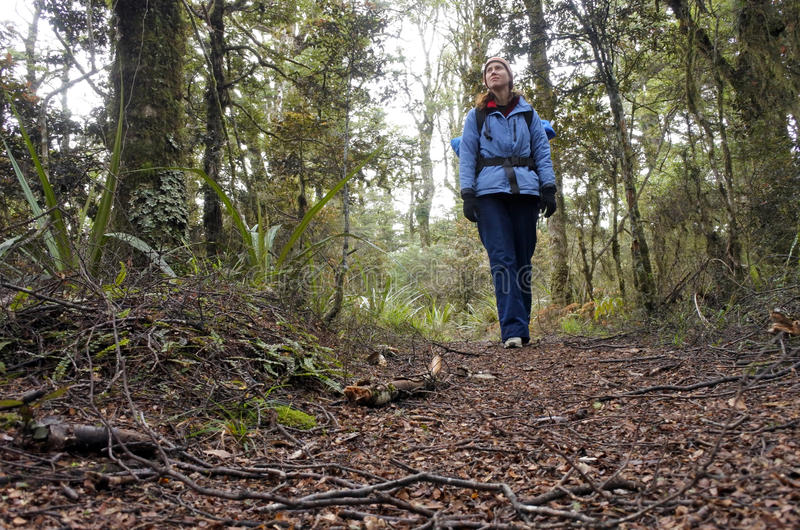 Οδοιπόρος γυναικών που στο τροπικό δάσος στοκ φωτογραφίες με δικαίωμα ελεύθερης χρήσης