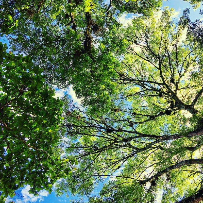 ο ουρανός μέσω του δάσους στοκ εικόνες με δικαίωμα ελεύθερης χρήσης