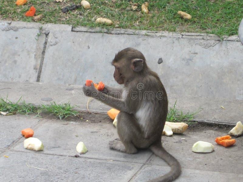 Ο πίθηκος τρώει τα φρούτα σε Lopburi Ταϊλάνδη στοκ εικόνες