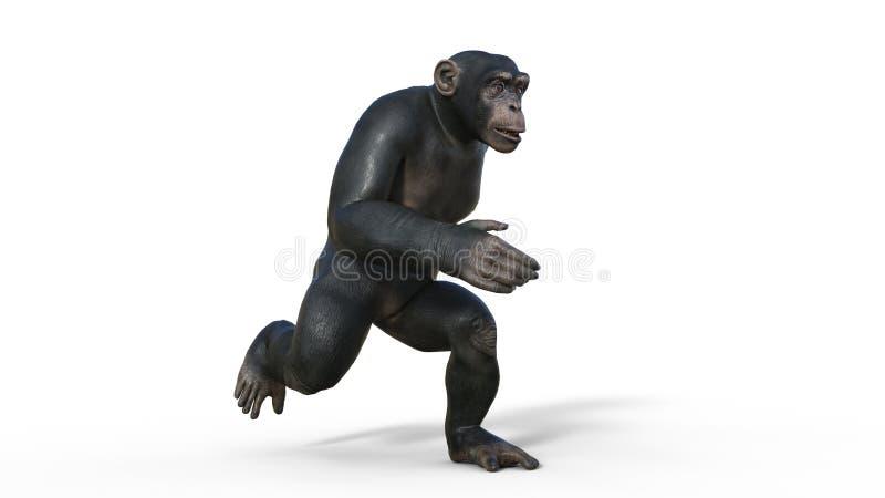 Ο πίθηκος χιμπατζών, πίθηκος αρχιεπισκόπων που τρέχει, άγριο ζώο που α απεικόνιση αποθεμάτων