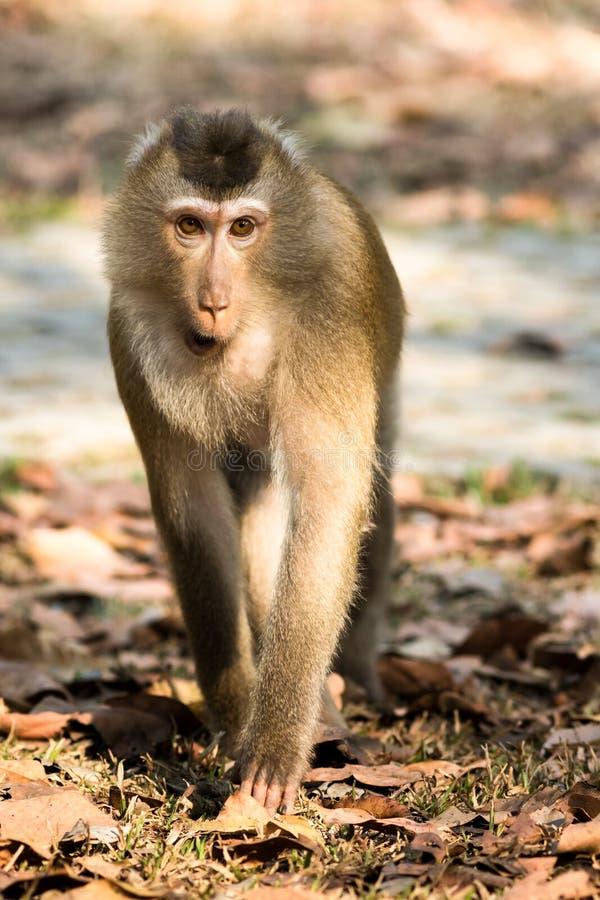 Ο πίθηκος στοκ φωτογραφία