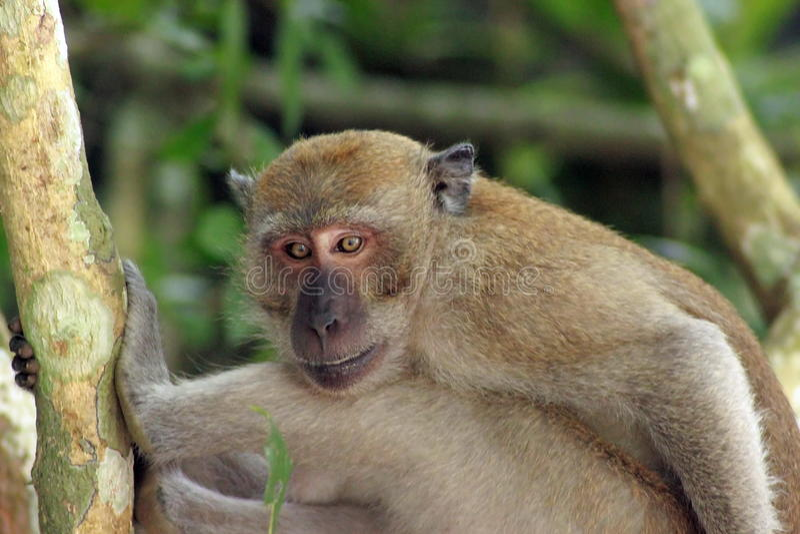 Ο πίθηκος στοκ φωτογραφία με δικαίωμα ελεύθερης χρήσης