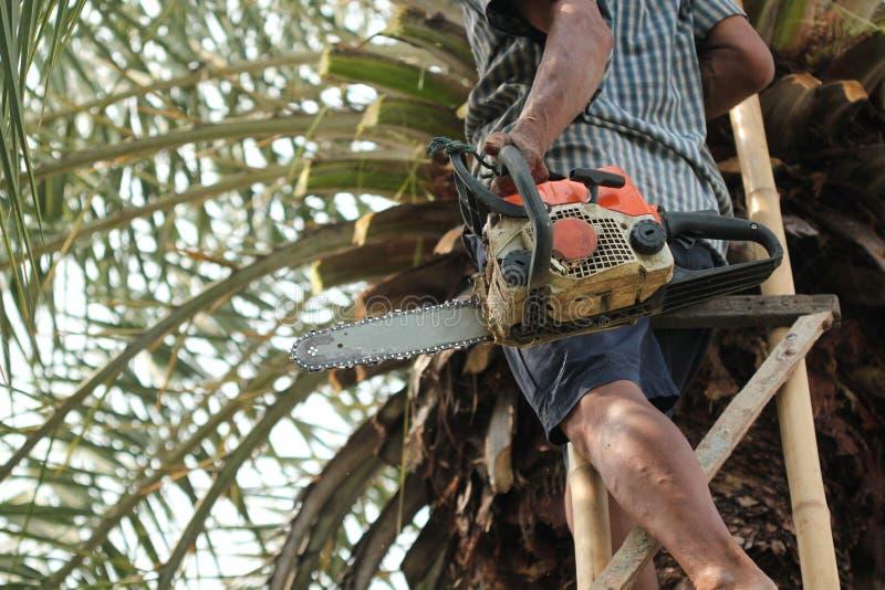 Ο παλαιός ισχυρός κηπουρός ατόμων κρατά ένα βαρέων καθηκόντων αλυσιδοπρίονο τακτοποιώντας και κόβοντας τα μεγάλα δέντρα στην εργα στοκ εικόνα