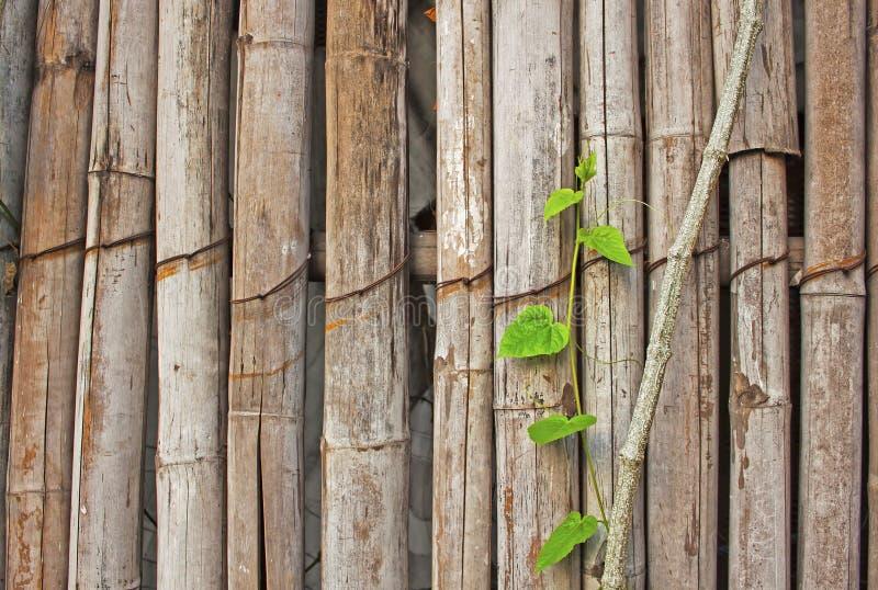 Ο παλαιός καφετής τοίχος μπαμπού στοκ εικόνες
