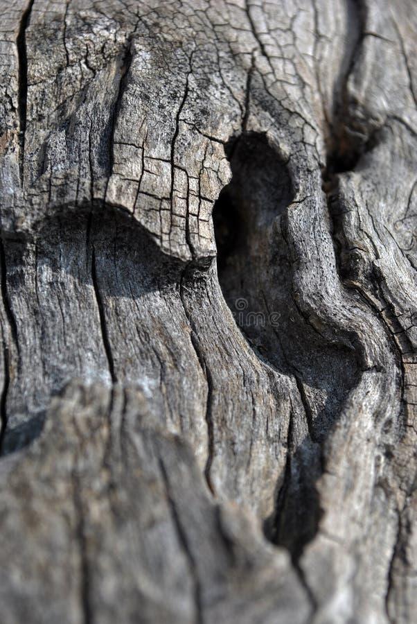 Ο παλαιός ραγισμένος κορμός δέντρων με τη σύσταση κυμάτων, γκρίζο μουτζουρωμένο υπόβαθρο, κλείνει επάνω τη λεπτομέρεια στοκ φωτογραφία με δικαίωμα ελεύθερης χρήσης