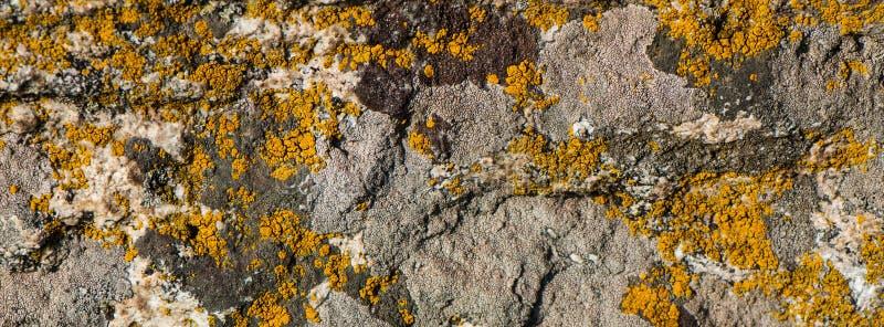 Ο παλαιός τοίχος καλύπτεται με το ξηρό κιτρινισμένο βρύο Έμβλημα Ιστού στοκ φωτογραφίες