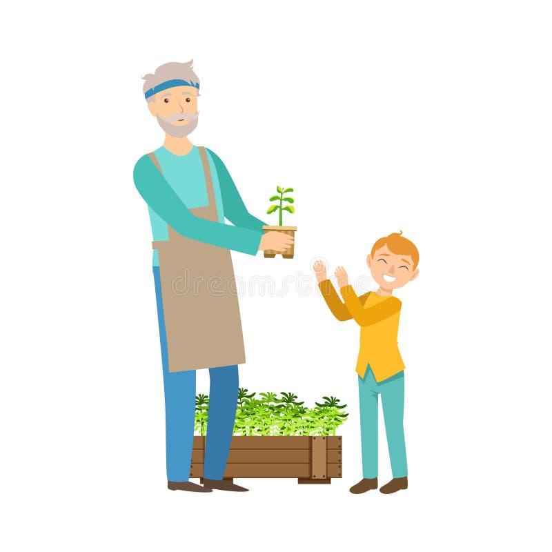 Ο παππούς και ο εγγονός που καλλιεργούν, μέρος του εγγονιού παππούδων και γιαγιάδων που περνά το χρόνο θέτουν μαζί τις απεικονίσε απεικόνιση αποθεμάτων