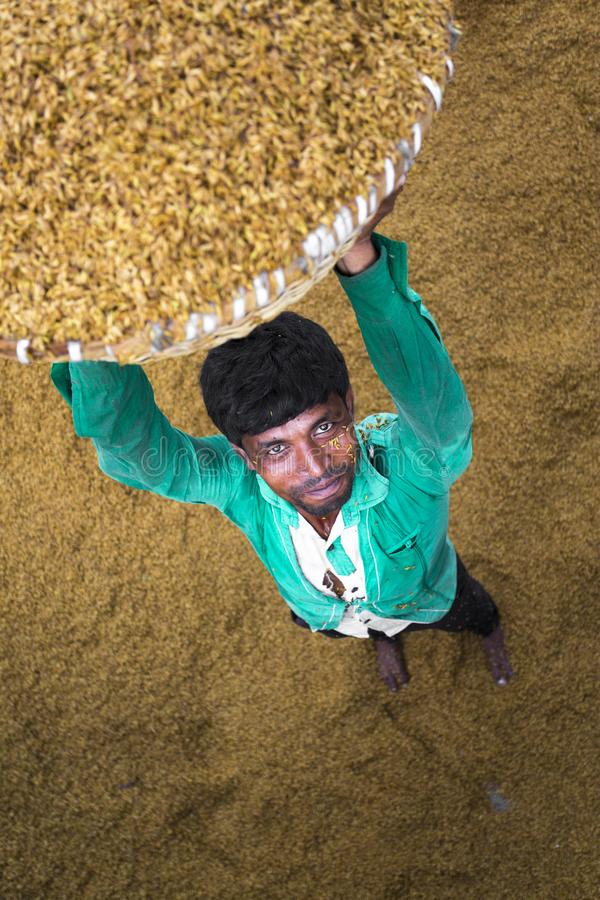 Ο παραδοσιακός εργαζόμενος μύλων ρυζιού αναποδογυρίζει τον ορυζώνα για την ξήρανση στοκ εικόνα με δικαίωμα ελεύθερης χρήσης