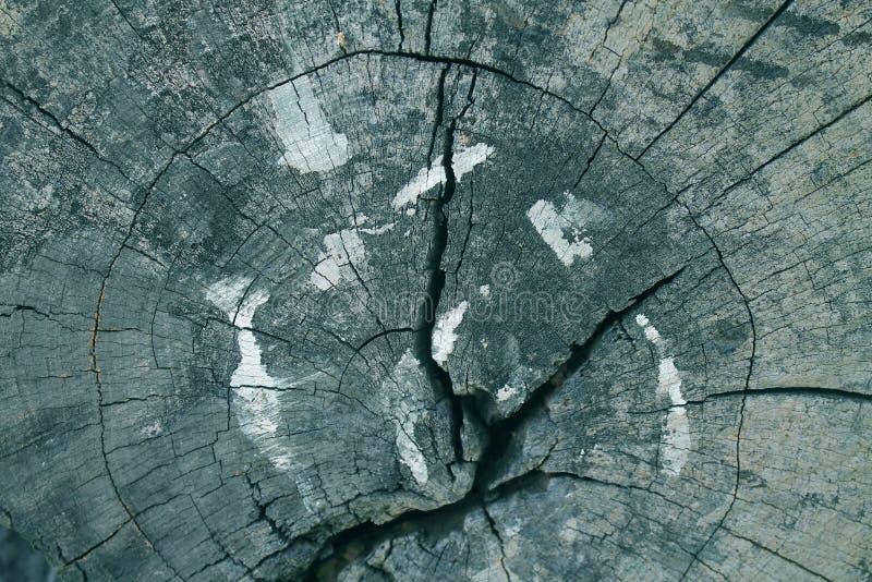 Ο παλαιός κορμός δέντρων στοκ εικόνες με δικαίωμα ελεύθερης χρήσης