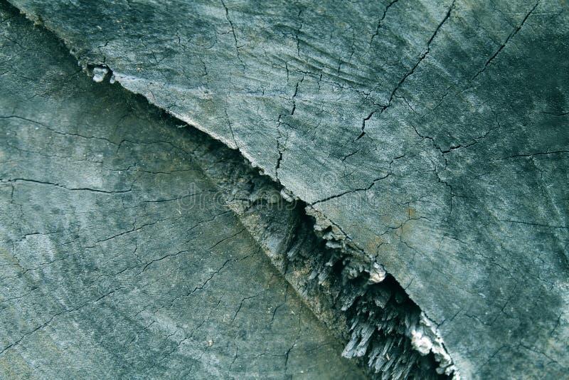 Ο παλαιός κορμός δέντρων στοκ εικόνες