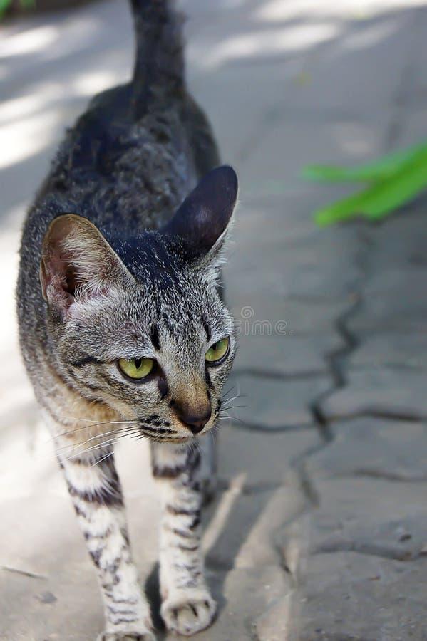 Ο περίπατος γατών δεν ενδιαφέρεται για τίποτα στοκ φωτογραφίες με δικαίωμα ελεύθερης χρήσης