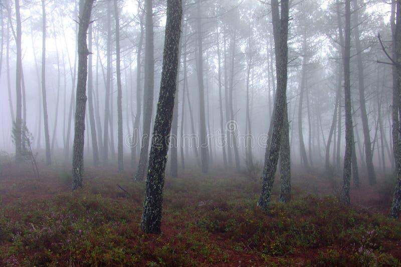 ο πιό florest στοκ φωτογραφίες με δικαίωμα ελεύθερης χρήσης