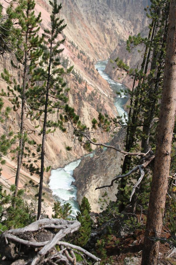 Ο ποταμός Yellowstone στο μεγάλο φαράγγι του Yellowstone στοκ εικόνες με δικαίωμα ελεύθερης χρήσης