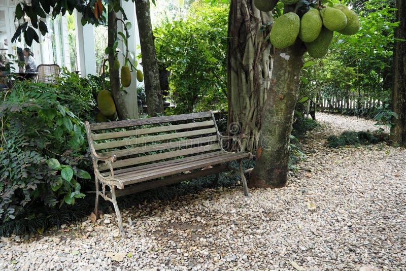 Ο πράσινος κήπος φαίνεται ειρήνη και φαίνεται συμπαθητικός στοκ φωτογραφίες με δικαίωμα ελεύθερης χρήσης
