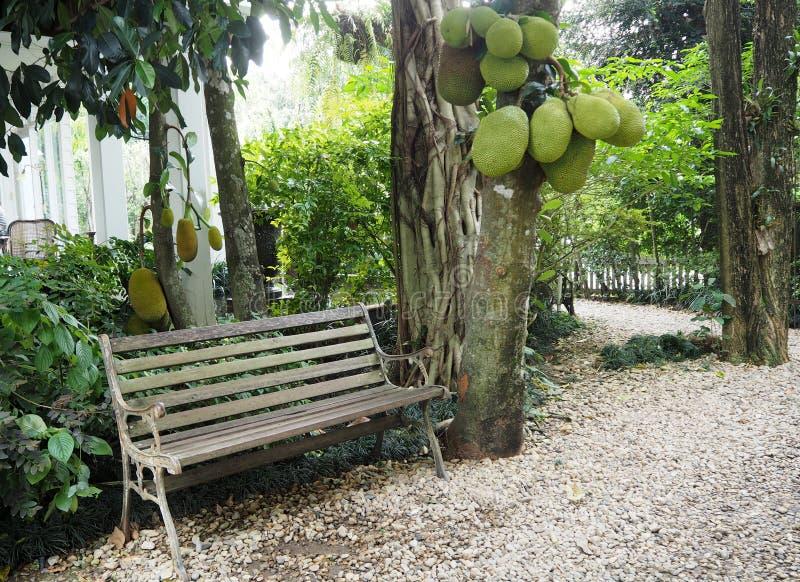 Ο πράσινος κήπος φαίνεται ειρήνη και φαίνεται συμπαθητικός στοκ εικόνες με δικαίωμα ελεύθερης χρήσης