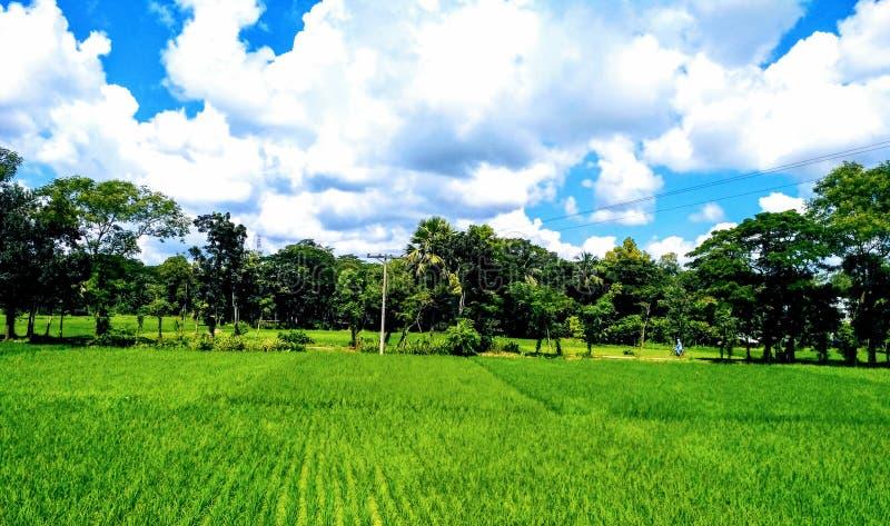 Ο πράσινος τομέας με το μπλε ουρανό & το άσπρο σύννεφο στοκ φωτογραφία με δικαίωμα ελεύθερης χρήσης