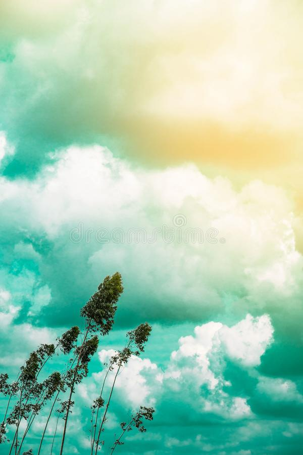 Ο πράσινος τρύγος δέντρων τόνισε, μόδα, ταξίδι, καλοκαίρι, διακοπές και τροπική παραλία Δημιουργικός φιαγμένος από πράσινα φύλλα  στοκ εικόνα