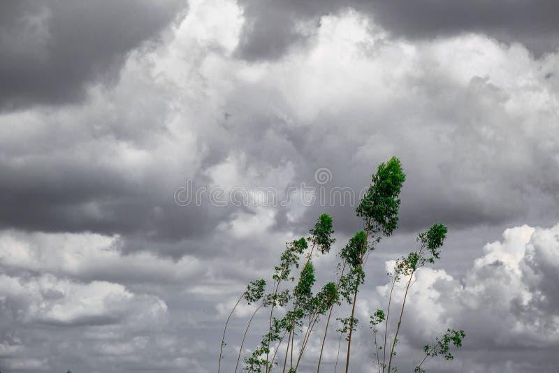 Ο πράσινος τρύγος δέντρων τόνισε, ο ουρανός και καλύπτει το γραπτό υπόβαθρο Δημιουργικός φιαγμένος από πράσινα φύλλα δέντρων δραμ στοκ εικόνα με δικαίωμα ελεύθερης χρήσης