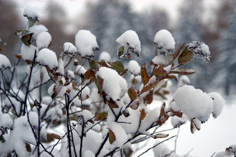 Ο πρώιμος χειμώνας έχει έρθει στοκ εικόνα