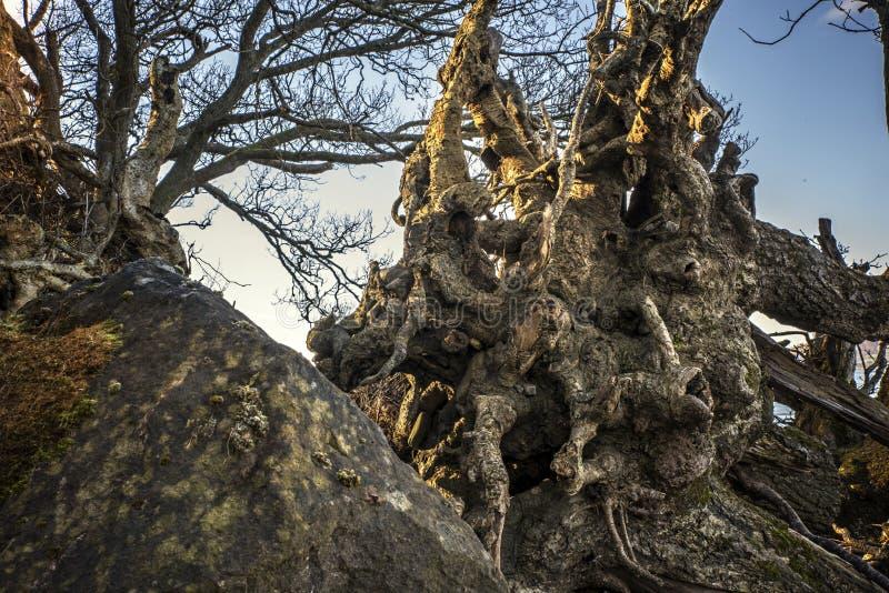 Ο δραματικός στενός πυροβολισμός οι ρίζες δέντρων στοκ φωτογραφία με δικαίωμα ελεύθερης χρήσης