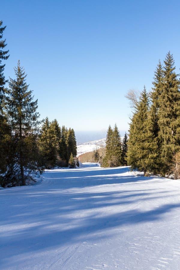 Ο δρόμος στο σκι μέσω των ξύλων στο Καζακστάν στοκ φωτογραφία με δικαίωμα ελεύθερης χρήσης