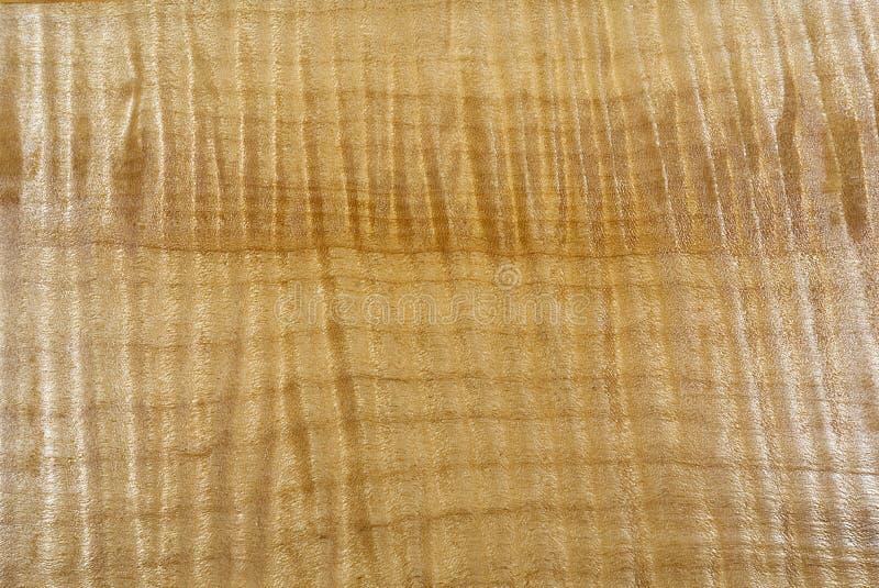 Ο σγουρός σφένδαμνος του Όρεγκον με ένα σατέν τελειώνει στοκ εικόνες με δικαίωμα ελεύθερης χρήσης