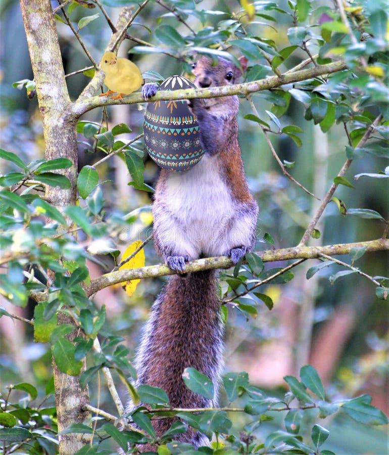 Ο σκίουρος ξέρει ότι έχει κάτι πολύ νόστιμο σε την μικρά πόδια στοκ εικόνα με δικαίωμα ελεύθερης χρήσης