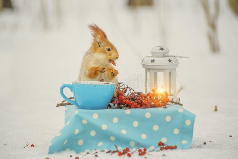 Ο σκίουρος στον πίνακα τρώει τα καρύδια από ένα φλυτζάνι σε ένα δασικό χειμερινό ξέφωτο Δασική χειμερινή εικόνα παραμυθιού στοκ φωτογραφία