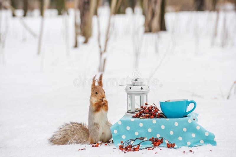 Ο σκίουρος τρώει τα καρύδια στοκ εικόνες