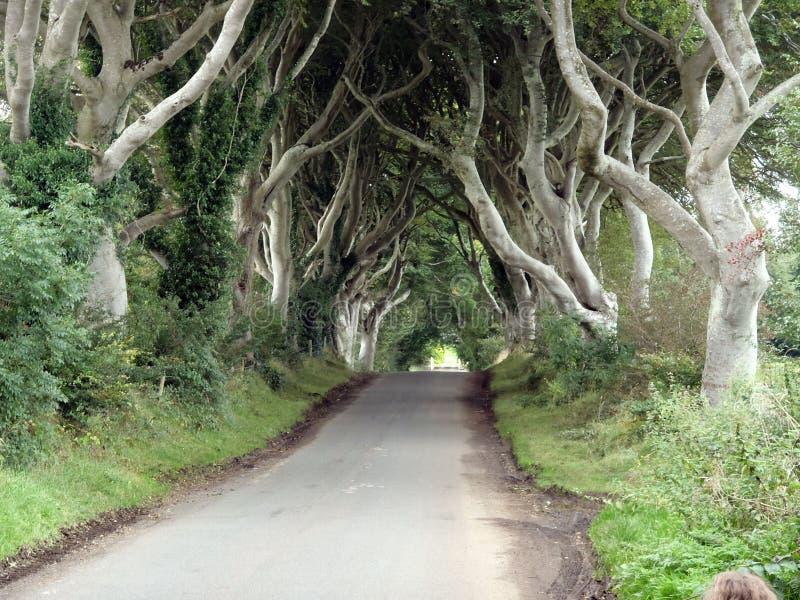 Ο σκοτεινός δρόμος Antrim Βόρεια Ιρλανδία βασιλιάδων φρακτών στοκ φωτογραφίες με δικαίωμα ελεύθερης χρήσης