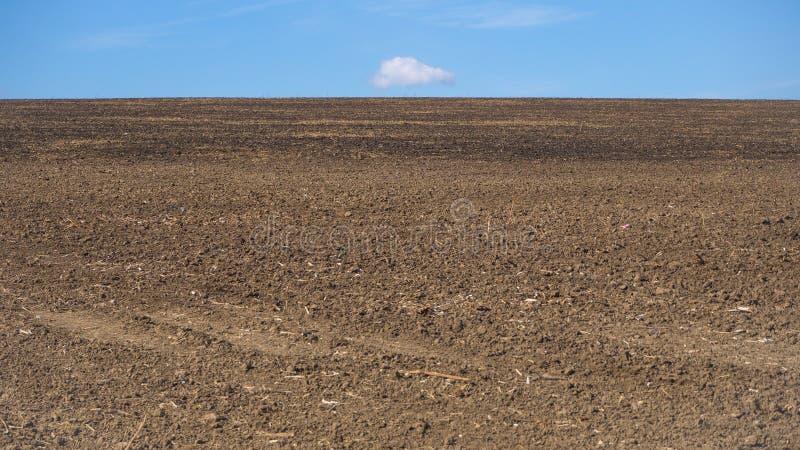 Ο σπαρμένος τομέας της γης στον ορίζοντα στοκ εικόνα