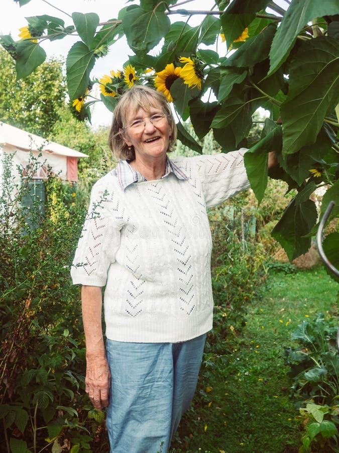 Ο συνταξιούχος εξετάζει τους ηλίανθούς της στον κήπο της στοκ εικόνα