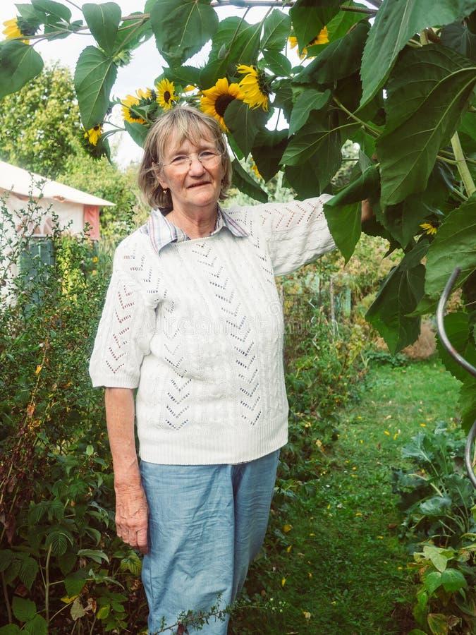 Ο συνταξιούχος εξετάζει τους ηλίανθούς της στον κήπο της στοκ εικόνες