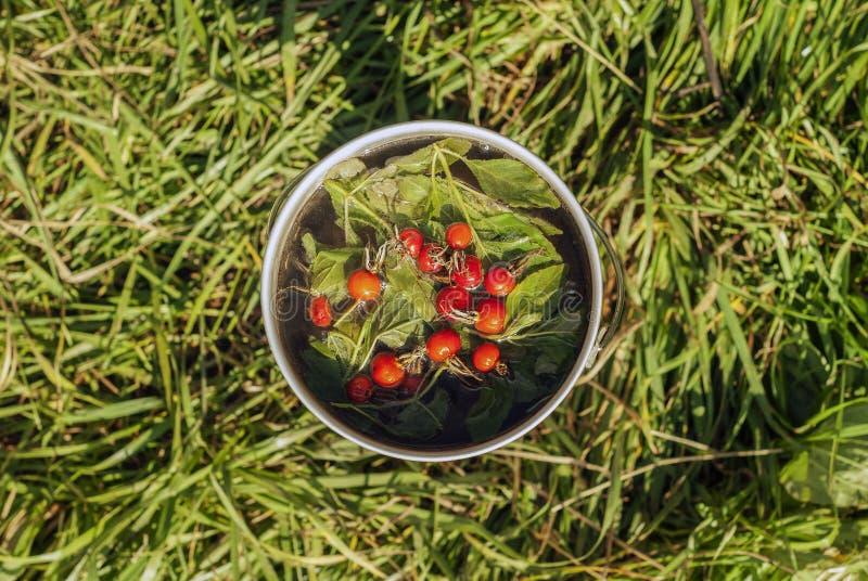 Ο σφαιριστής με τα παρασκευασμένα φύλλα μεντών και άγριος αυξήθηκε μούρα στοκ εικόνα με δικαίωμα ελεύθερης χρήσης
