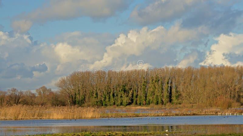 Ο σωρείτης καλύπτει πέρα από ένα ηλιόλουστο τοπίο χειμερινών ελωδών περιοχών με τον κάλαμο και τα γυμνά δέντρα στοκ εικόνες με δικαίωμα ελεύθερης χρήσης