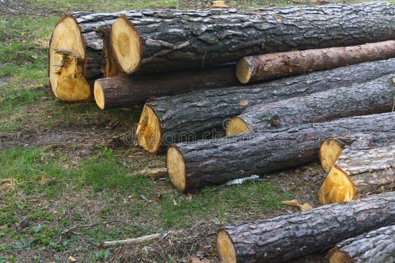 Ο σωρός των μακροχρόνιων ξύλινων κούτσουρων συσσώρευσε οριζόντια την κινηματογράφηση σε πρώτο πλάνο στο δάσος στοκ εικόνες